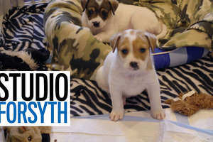Studio Forsyth: Never a dull moment in the life as pet foster parents
