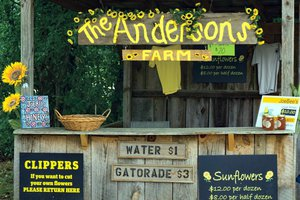 FCN The Anderson Sunflower Farm 4 111418